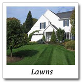 lawns landscape designs